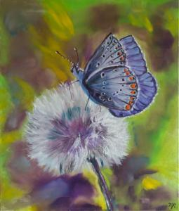 _MG_8702b-Schmetterling_web